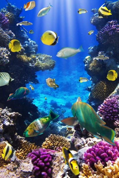 Фотообои подводный мир кораллы рыбки (underwater-world-00132)