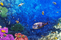 underwater-world-00149
