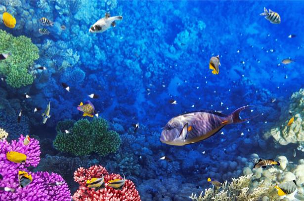 Подводный мир кораллы - фотообои 3д (underwater-world-00149)