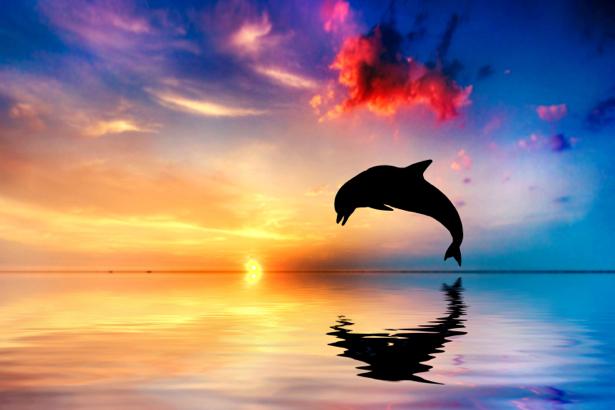 Фотообои Дельфин на закате (animals-0000445)