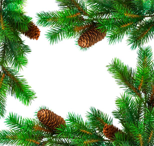 Фотообои ветки елки (background-0000168)
