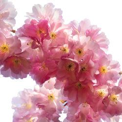 flowers-0000010