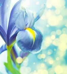 flowers-0000339