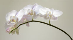 flowers-0000368