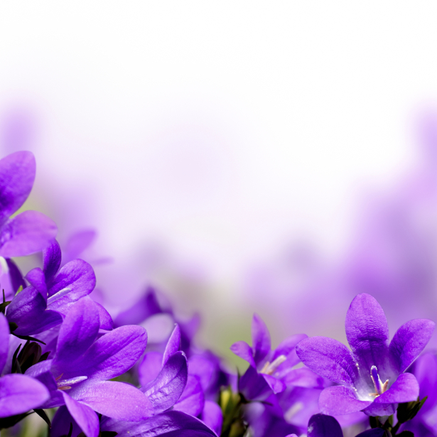 Фото обои на стену - Колокольчики (flowers-0000385)