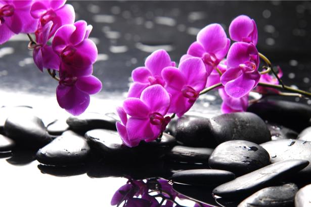 Фото обои на стену камешки и орхидея (flowers-0000407)