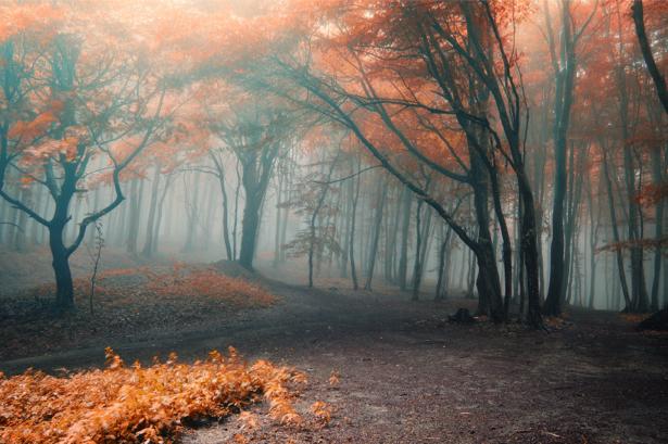 Фотообои осенний лес туман (nature-0000694)