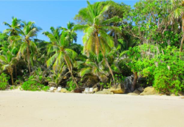 Фотообои остров побережье с пальмы (sea-0000151)