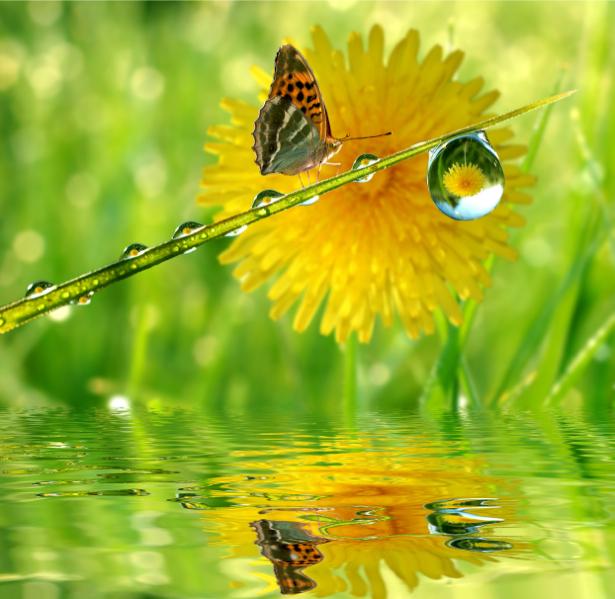Фотообои бабочка капли роса (animals-0000258)
