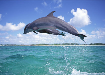 Фотообои дельфины в прыжке (animals-0000300)