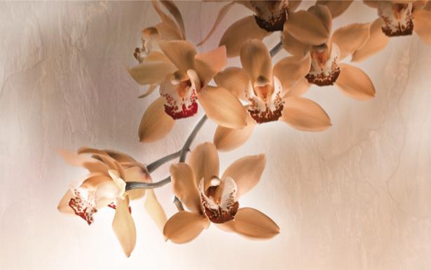 Фотообои на стену кремовой орхидеи (flowers-0000200)