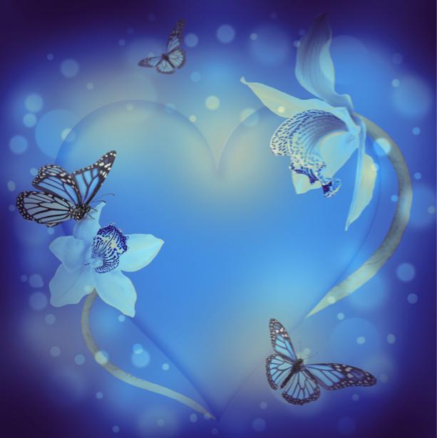 Фото обои орхидеи и бабочки на синем фоне (flowers-0000395)