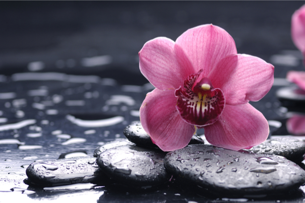 Фото обои на стену камешки и орхидея (flowers-0000405)