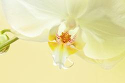 flowers-0000451