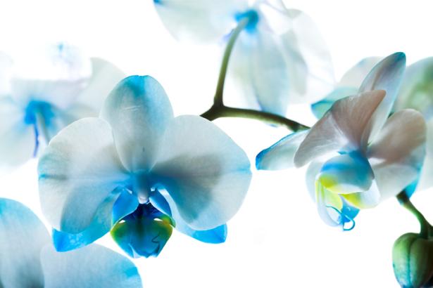 Обои фото цветок орхидеи (flowers-0000565)