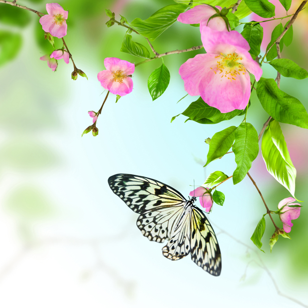 Фото обои цветущая ветка (flowers-0000571)