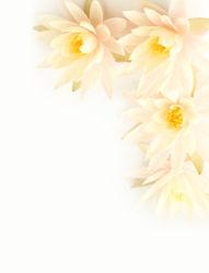 flowers-0000575