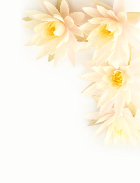 Обои на стену белые цветы (flowers-0000575)