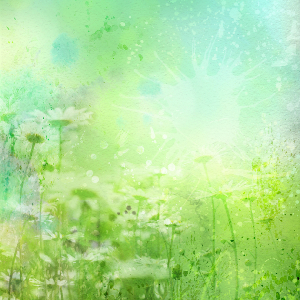 Обои фото цветы ромашки в траве (flowers-0000688)