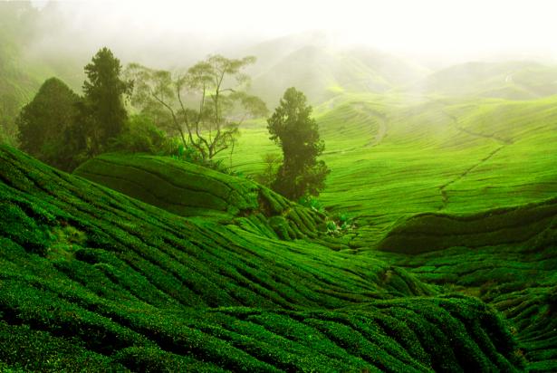 Фотообои поле холм фото пейзаж (nature-00434)