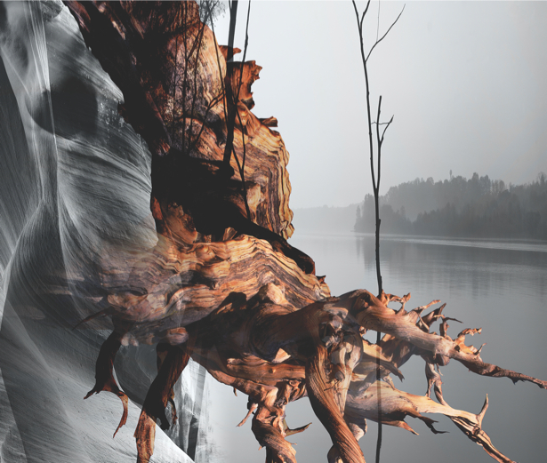 Фотообои корень дерева (nature-00595)