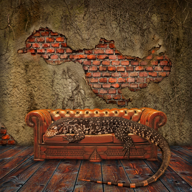 Фотообои стена ящерица мебель (retro-vintage-0000009)