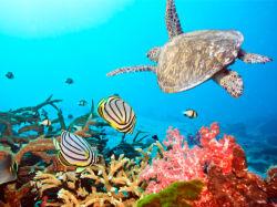 underwater-world-00011
