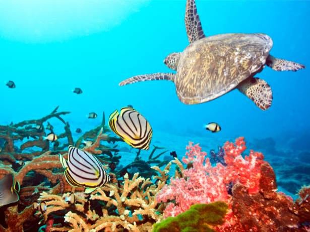 Фотообои для ванны океан черепаха (underwater-world-00011)