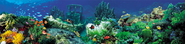 Фотообои для ванны затонувший корабль (underwater-world-00055)