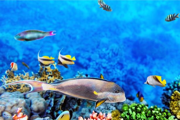 Подводный мир, кораллы, рыбки (underwater-world-00151)