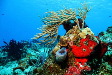 Фотообои в ванную кораллы риф рыбки (underwater-world-00196)
