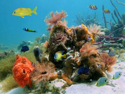 Фотообои в ванную подводный мир риф (underwater-world-00197)