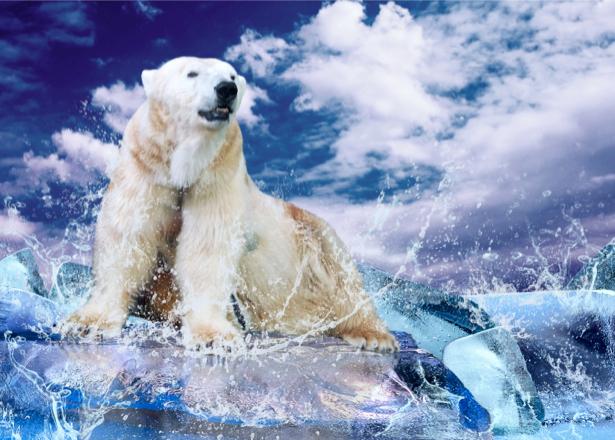 Фотообои белый медведь на льду (animals-0000050)