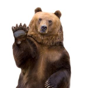 Фотообои медведь на белом фоне (animals-0000143)