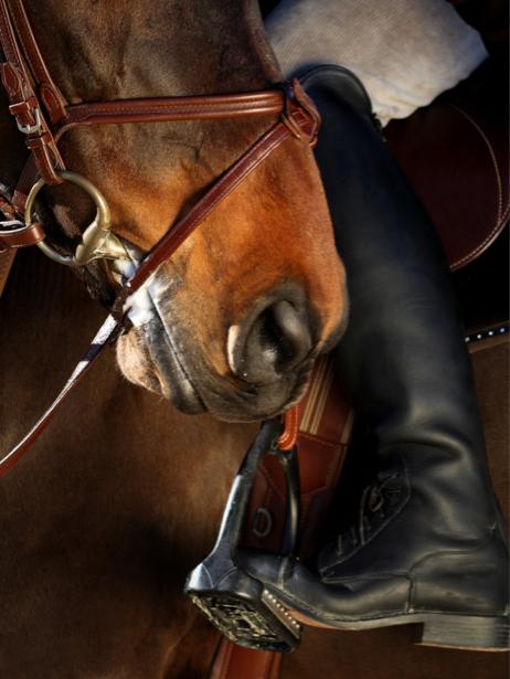 Фотообои конь, лошадь (animals-0000280)