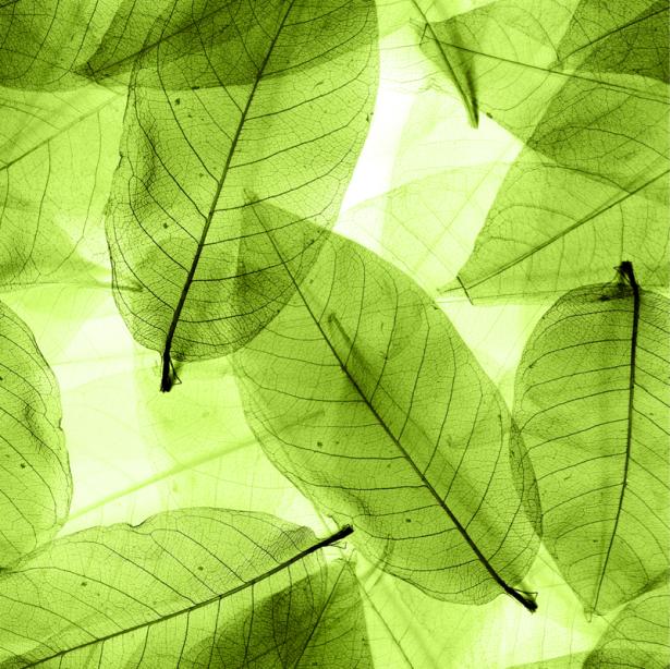 Фотошторы с зелеными листьями (bedroom-curtain-00014)