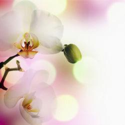flowers-0000046