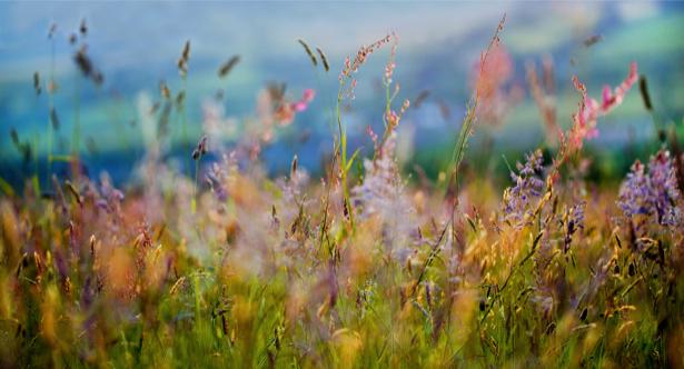 Фото обои Полевые цветы (flowers-0000165)