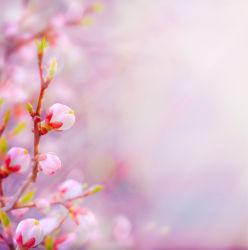 flowers-0000422