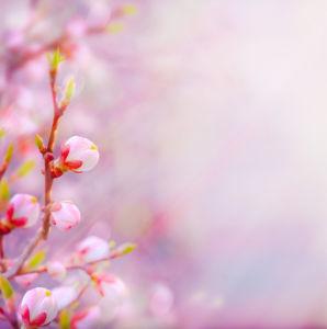Обои фото ветка цветущего дерева (flowers-0000422)
