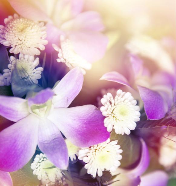 Обои фото цветок фон цветочный (flowers-0000526)