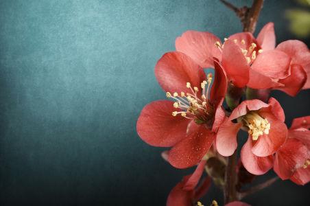 Фотообои цветы на ветке (flowers-770)