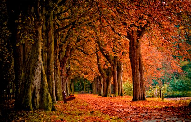 Фотообои красивая дорога и лес (nature-00201)