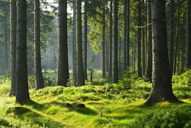 Фотообои Деревья в лесу (nature-874)