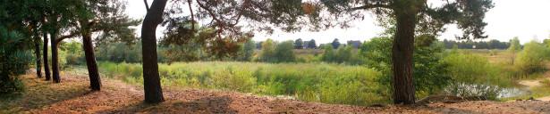 Фотообои хвойный лесный панорама (panorama_0000018)
