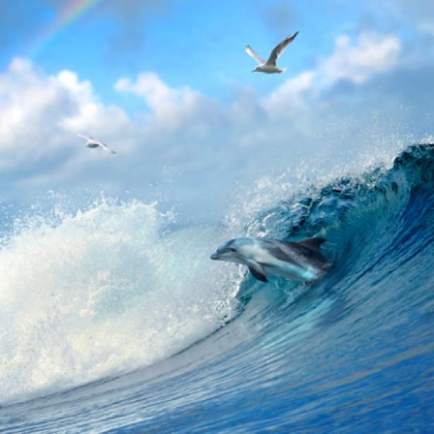 Фотообои фото море волны дельфин (sea-0000064)