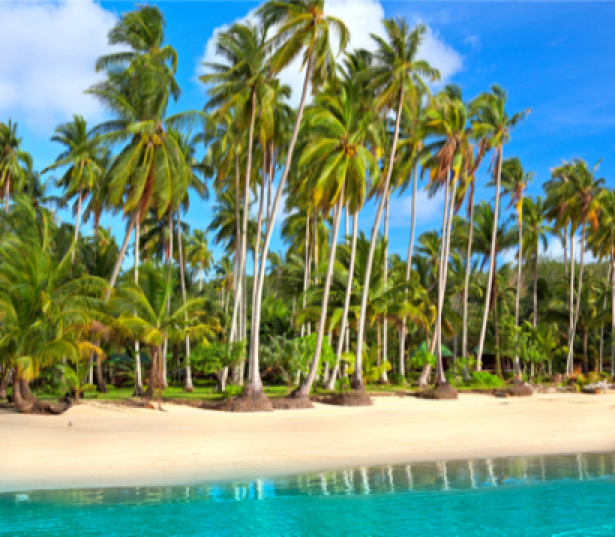 Фотообои пальмовое побережье (sea-0000155)