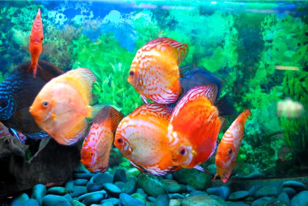 Фотообои ванная водоросли рыбки море (underwater-world-00018)