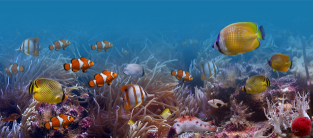 Рыбки подводный мир обои фотообои (underwater-world-00060)