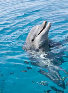 Фотообои в воде дельфин (animals-0000111)